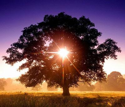 Гороскоп деревьев: дерево-покровитель и ваш характер