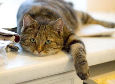Кошка и фэн-шуй на страже покоя человека