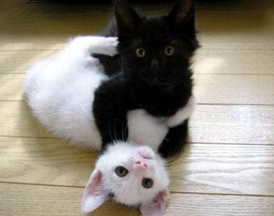 Кошка и фэн-шуй, миф или реальность?