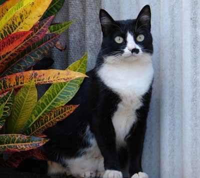 Кошка в доме по фен-шуй