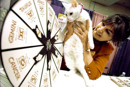 гороскоп для кошек