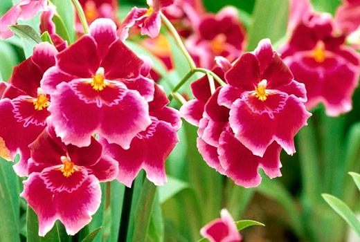 орхидеи энергетика