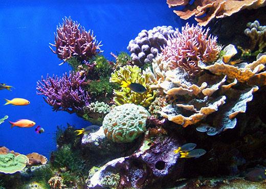 Коралл магические свойства камня